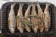 Preparazione della trota del pesce fresco sulla griglia elettrica Fotografia Stock Libera da Diritti