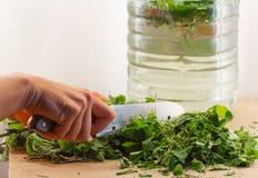 Preparazione di bio- fertilizzante naturale organico a casa Una mano del ` s della donna taglia l'acetosella dal coltello sulla t fotografia stock