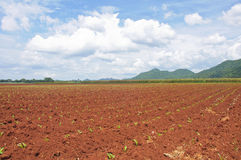 Preparazione di coltivazione del suolo Immagine Stock Libera da Diritti