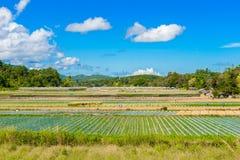 Preparazione di suolo per coltivazione della fragola, giacimento della fragola Fotografia Stock