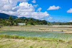 Preparazione di suolo per coltivazione della fragola, giacimento della fragola Immagini Stock Libere da Diritti