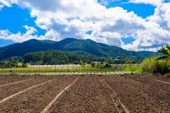 Preparazione di suolo per coltivazione della fragola, giacimento della fragola Fotografie Stock Libere da Diritti