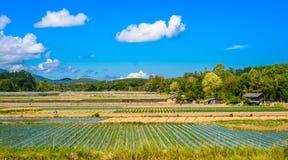 Preparazione di suolo per coltivazione della fragola, giacimento della fragola Immagini Stock