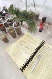 Preparazione e controllo di alimento di erbe Fotografia Stock