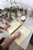 Preparazione e controllo di alimento di erbe Fotografie Stock Libere da Diritti