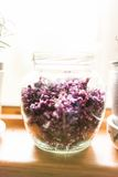 Preparazione lilla della gelatina fotografia stock