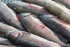 Preparazione pescata fresca della trota Immagine Stock Libera da Diritti