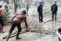 Preparazioni cinesi del nuovo anno nel Vietnam Fotografia Stock Libera da Diritti