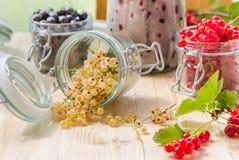 Preparazioni nere bianche dei barattoli delle ciliege delle uva spina del ribes rosso Fotografia Stock Libera da Diritti