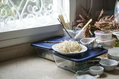Prepare for cooking noodle with many ingredients Stock Images