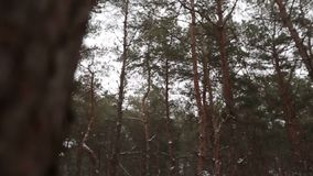 Prepare a la novia feliz de giro o de torneado que la detiene en sus manos en bosque del pino del tiempo de la nieve durante las  metrajes
