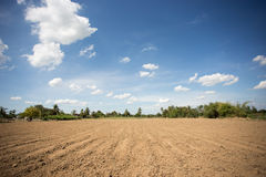 Prepare plantation with blue sky Stock Images