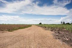 Prepare plantation with blue sky Stock Photos