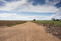 Prepare plantation with blue sky Royalty Free Stock Photography