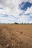 Prepare plantation with blue sky Royalty Free Stock Image