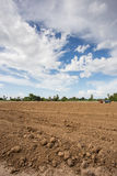 Prepare plantation with blue sky Stock Photo