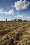 Prepare plantation with blue sky Stock Image
