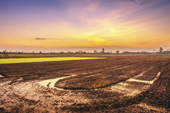 Prepare the planting area of rice farmers Stock Images