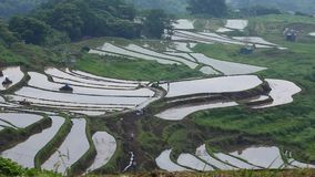 Prepare rice paddies for rice terraces. It is preparation for rice planting. Plowing paddy fields stock footage