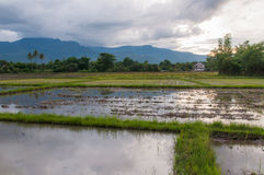 Prepare the soil for rice fields. On sunset Royalty Free Stock Images