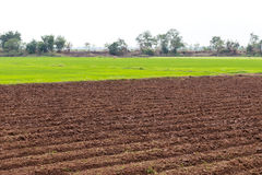 Prepare soil tillage cultivation. Landscape view wide areas of land were prepared for plowing paddy crop cultivation Royalty Free Stock Photography