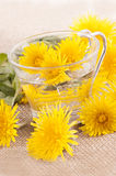 Prepare some dandelion tea in a glass cup. With water Stock Photo