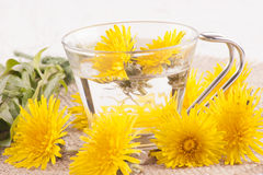 Prepare some dandelion tea in a glass cup Royalty Free Stock Photo