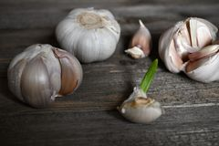 Garlic on the wood table background. We prepare vegetable cook for dinner on Christmas day Royalty Free Stock Photos