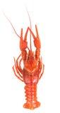 Prepared big crayfish Royalty Free Stock Photography