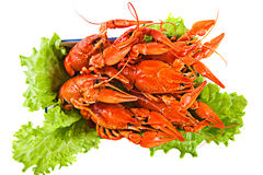 The prepared lobsters on a dish with salad. The prepared boiled lobsters on a dish with salad, isolation Stock Photo