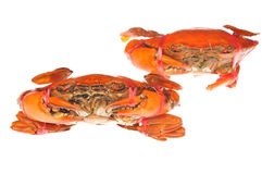 Prepared crab Stock Photography