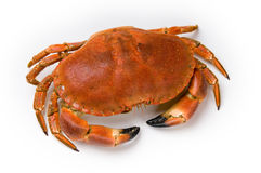 Prepared crab. On white background Royalty Free Stock Image