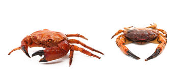 Prepared crabs. Royalty Free Stock Photos