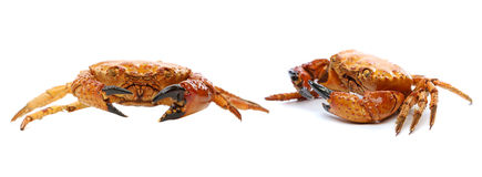 Prepared crabs. Royalty Free Stock Photography