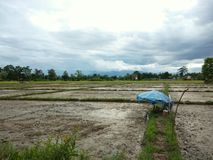 Prepared field for new season of agriculture. Farmer prepare a field to scatter seeds Stock Image