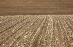 Prepared Field planted with corn after the harvest. Royalty Free Stock Photos