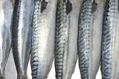 Prepared fish closeup Royalty Free Stock Image