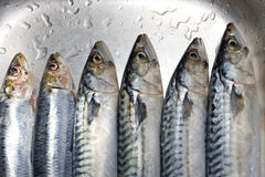 Prepared fish closeup Royalty Free Stock Images