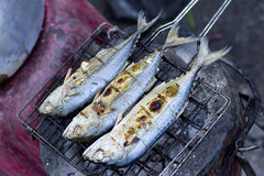 Prepared fish on grappling iron Royalty Free Stock Images