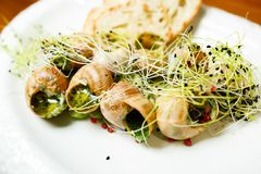 Prepared foods classic french escargot burgundy snails with spinach. Escargots de Bourgogne.  royalty free stock photos