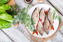 Prepared for frying fish roach Stock Images