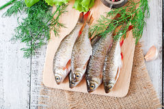 Prepared for frying fish roach Royalty Free Stock Image
