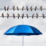 Prepared For The Inevitable. And ready for anticipated trouble as a group of birds on wires with an open umbrella anticipating and planning for eventual Royalty Free Stock Photography