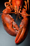 Prepared lobster on black Stock Photo