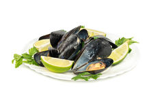 Prepared mussels in a plate Royalty Free Stock Photography