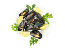 Prepared mussels in a plate Stock Images