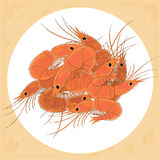 Prepared shrimp on the white plate. Stock Photography