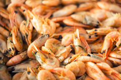 Prepared shrimps Royalty Free Stock Photography