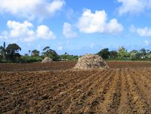 Prepared Soil. Ridges in Soil cultivation royalty free stock photos