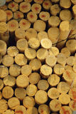 Prepared timber Stock Photography